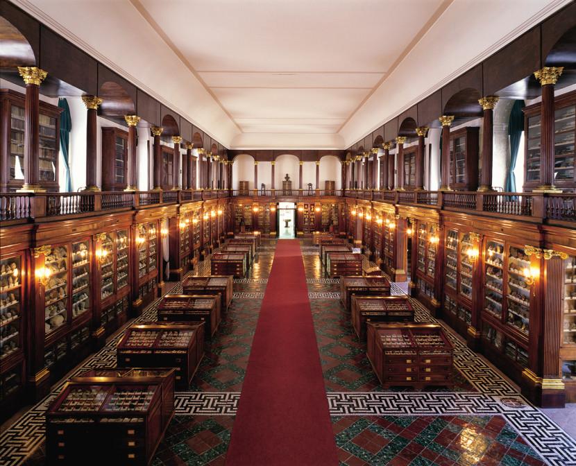 Musei di antropologia, mineralogia, zoologia e paleontologia dell'Università Federico II