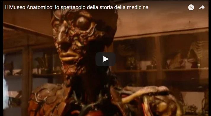 Il Museo Anatomico: lo spettacolo della storia della medicina