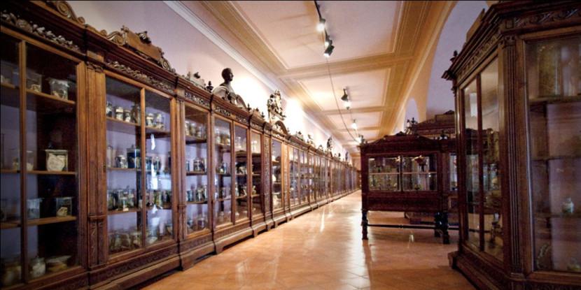 Il Museo di Anatomia di Napoli riapre al pubblico – Inaugurazione 14 marzo