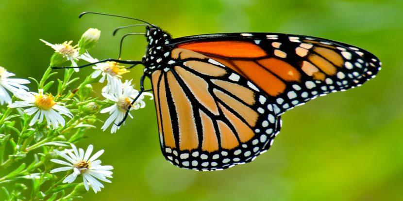 Universo delle Farfalle viventi nel Complesso Monumentale di San Lorenzo Maggiore
